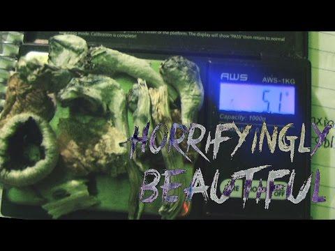 Horrifyingly Beautiful: Psilocybin Mushrooms (Documentary)