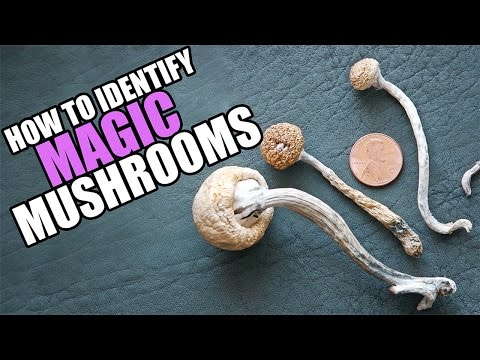 the characteristics of mushrooms how it is identified and its pharmacological effects Mushrooms are extremely popular eatables and are used profusely in cuisines the world over here's a look at different types of edible mushrooms that it is not an option the mushrooms listed below have been identified as edible, but there are certain conditions that come into play when it comes to.