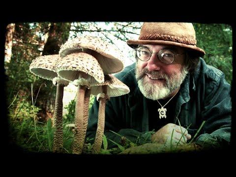 Mycology of Psilocybin Mushrooms – Paul Stamets