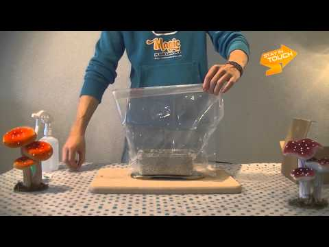 SupaGro Magic Mushrooms Grow Kit video instructions