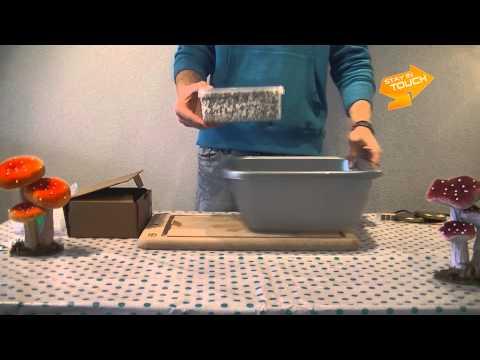 Instructions MMS Mushroom grow kit standard