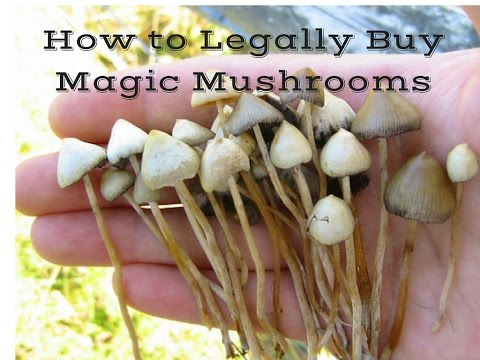 How to Legally Buy Magic Mushrooms!