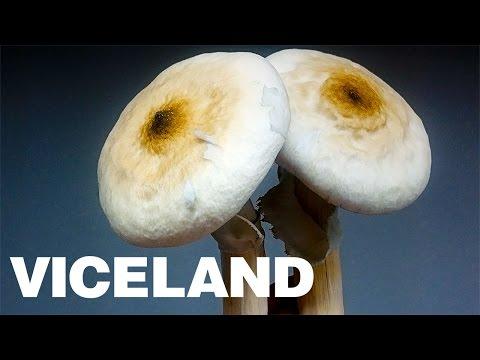 Inside a Clandestine Mushroom Lab: HAMILTON'S PHARMACOPEIA (Clip)