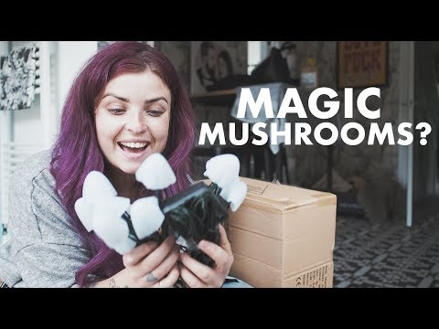 Magic Mushrooms?!