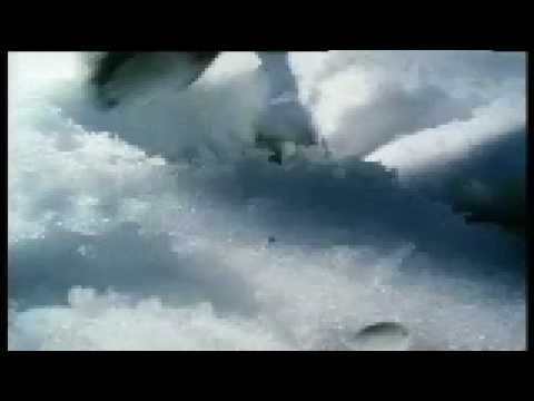 Magic mushrooms & Reindeer – Weird Nature – BBC animals
