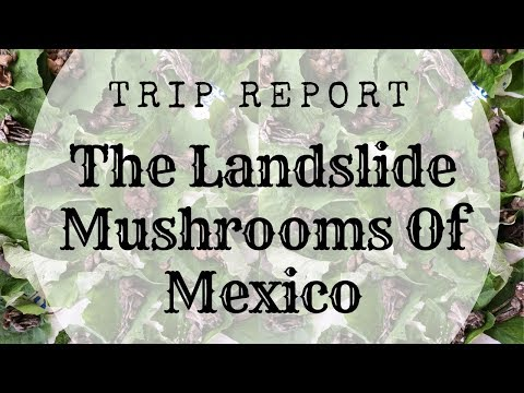 The Psychedelic Landslide Mushrooms Of San Jose del Pacifico | Trip Report