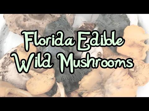 Florida Edible Wild Mushrooms