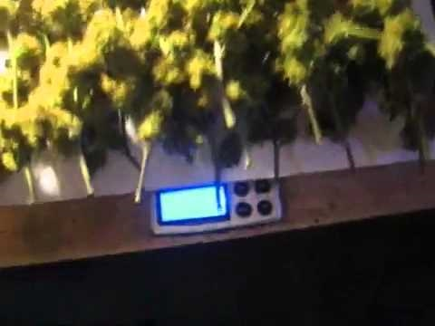 Medical Marijuana Grow Purple Kush