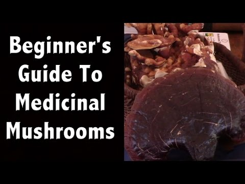 Beginner's Guide to Growing & Wildcrafting Medicinal Mushrooms – Quit Your Job and Farm Series