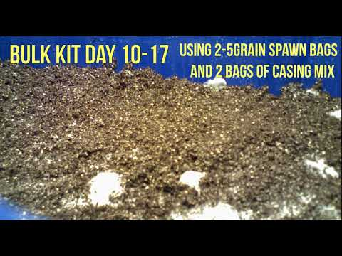 How to use Spawn Bags and Casing Mix for a Bulk Grow! Time Lapse