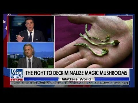 "The Fight To Decriminalize ""Magic Mushrooms"" In California – Watters' World"