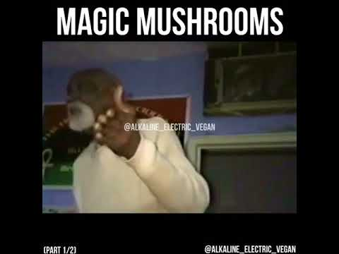 Dr. Sebi speaks on magic mushrooms