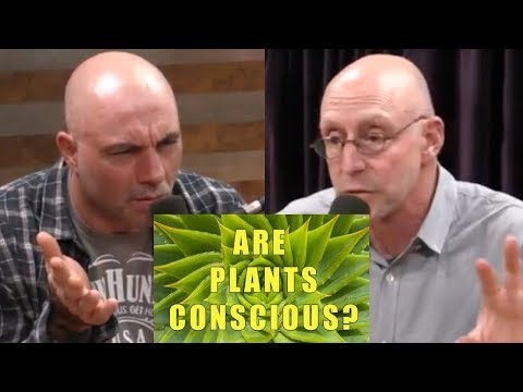 Joe Rogan – Plants are intelligent (conscious with feelings), Pineal Gland, Psychedelic Mushrooms