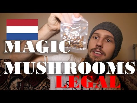 Magic Mushrooms und wo ihr sie legal konsumieren könnt!