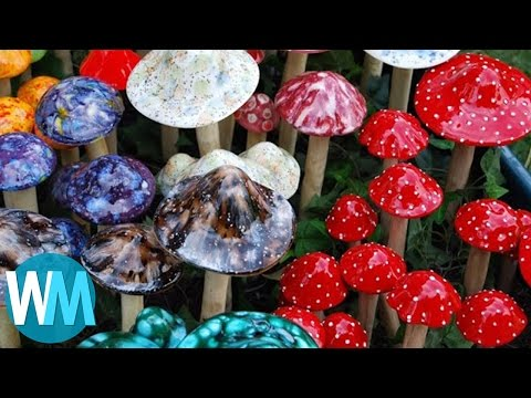 Top 5 TRIPPY Facts About Shrooms
