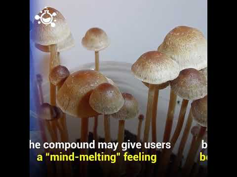 Magic Mushrooms : Psilocybin long term effects