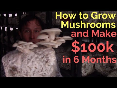 How to Grow Mushrooms & Make $100,000 in just 6 Months