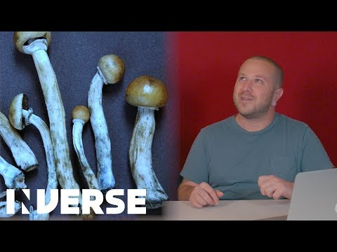 New Health Benefits of Magic Mushrooms | Inverse