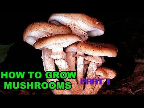 How to grow mushrooms part 1