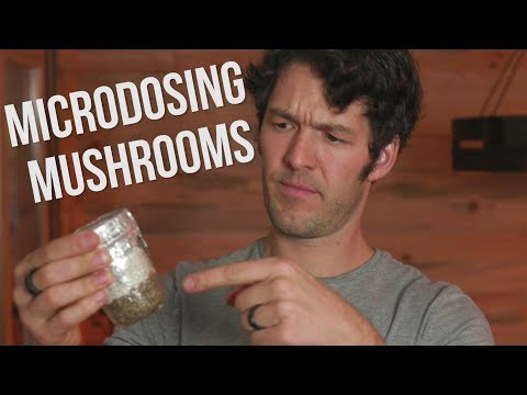Microdosing Mushrooms, LSD & DMT: Experiences and Feedback