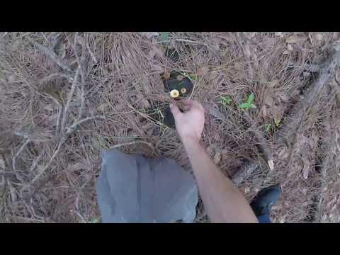 Shroom Hunters – Magic Mushroom Hunting in Florida (Gulf Coast)