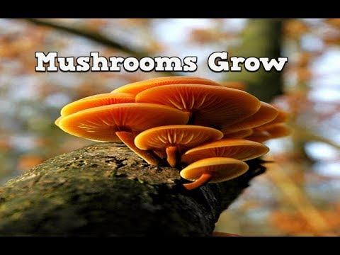 Mushrooms Grow, Mushroom Growing Guide, Cultivation Of Mushrooms, How To Grow Mushrooms Indoors