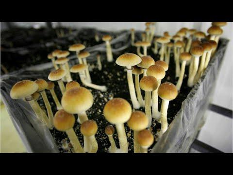 Denver May Decriminalize Psychedelic Mushrooms
