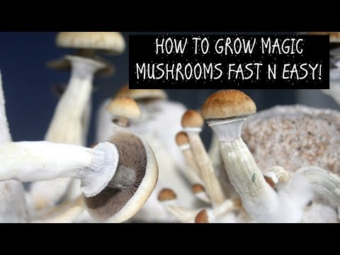 How to Grow Magic Mushrooms, Fast and Easy.