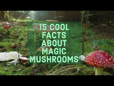 15 Cool Facts About Magic Mushrooms That You Will Find Interesting