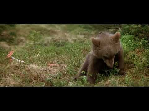 bear cub eats magic mushrooms