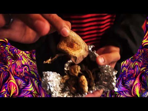I Vlogged My Magic Mushroom Trip