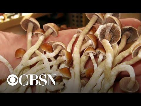 Denver voting on decriminalizing hallucinogenic mushrooms