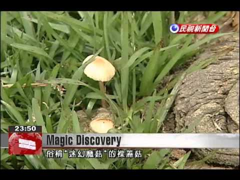 Surprise for man who unwittingly finds magic mushrooms in Yangmingshan