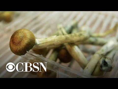 "Denver voters approve decriminalizing ""magic mushrooms"""