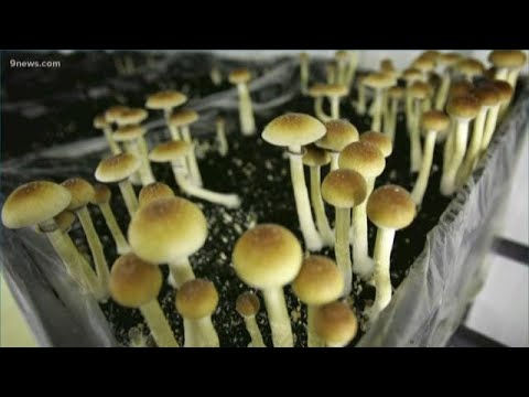 Psychedelic mushrooms could be decriminalized in Denver