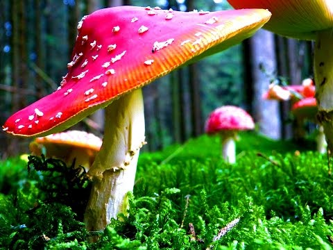 10 Facts About The Drug Magic Mushrooms