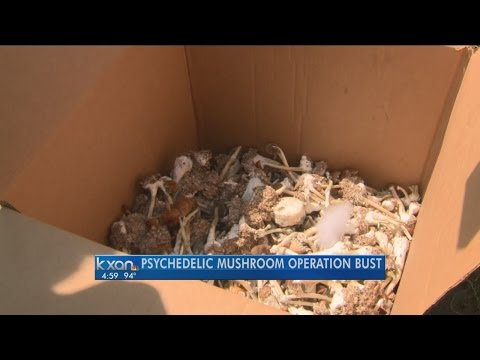 Illegal mushroom grow house discovered in South Austin