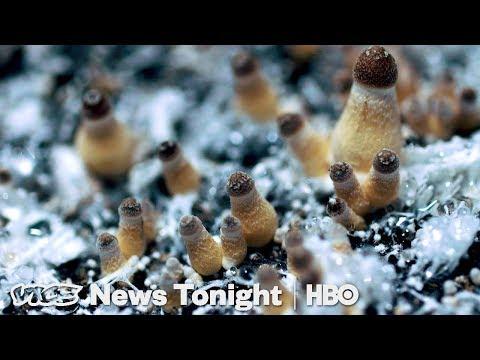 How Denver Decriminalized Magic Mushrooms (HBO)