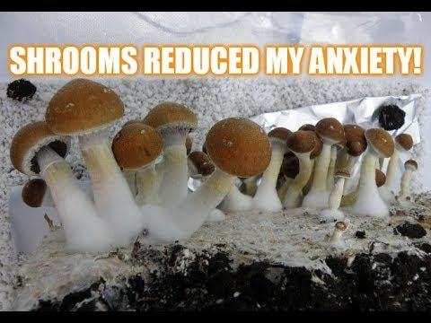 Harvesting Magic Mushrooms | Psilocybin Reduces My Anxiety!