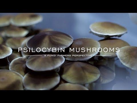 A fungi farmers perspective on psilocybin mushrooms