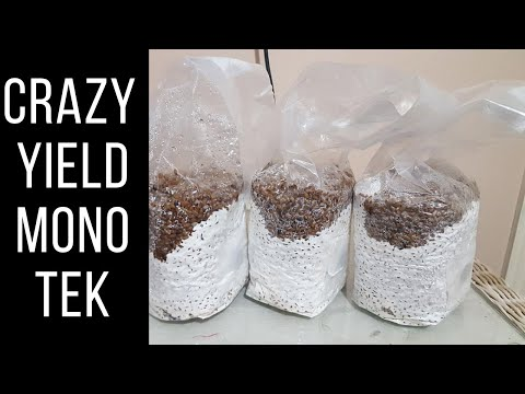 GROWING MUSHROOMS – EASY MONOTUB FILL