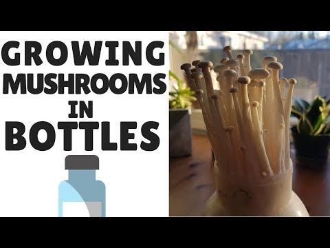 How To Grow Mushrooms In Bottles