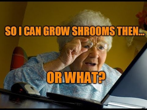 Is Growing Magic Mushrooms Legal?