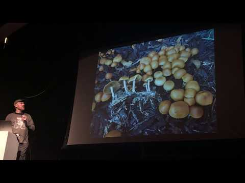 Alan Rockefeller on identifying psychoactive mushrooms growing in California