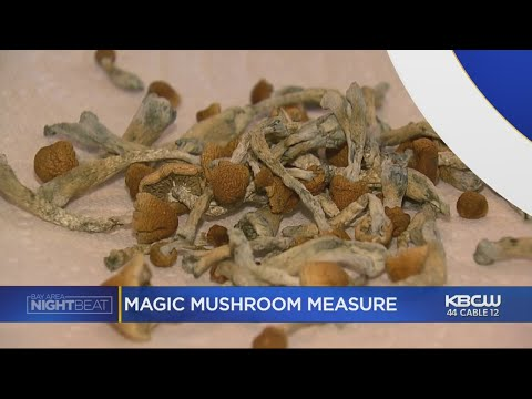 Oakland One Step Closer To Legalizing 'Magic Mushrooms' As Bill Moves Forward