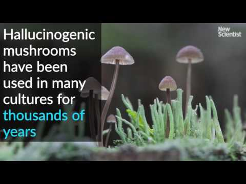 Magic mushrooms used to treat depression in first clinical trial