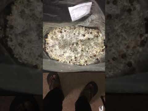 Magic Mushroom Grow Bag