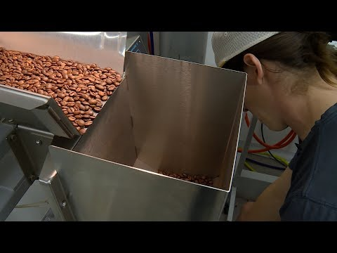 Denver roaster considers adding magic mushrooms to coffee